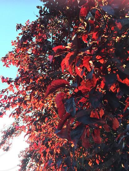 Sunlight summer beechwood sunshine leaves photo