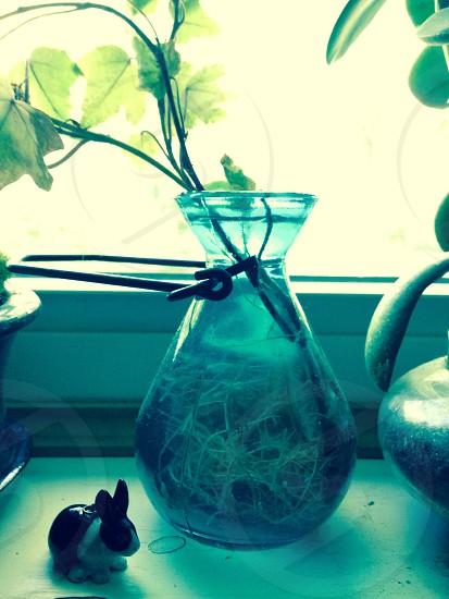 Teal vase on window seal photo