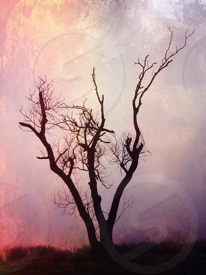 tall tree photo