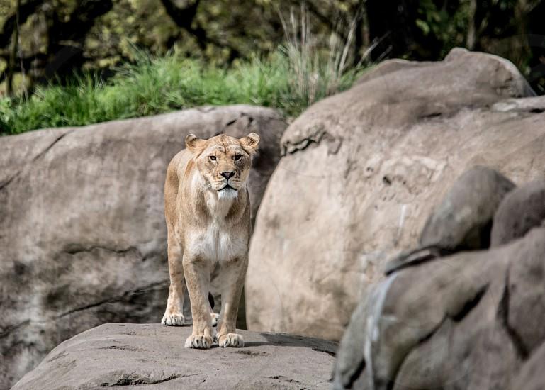 Wildlife 55 photo