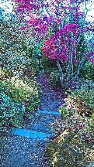 SHREWSBURY.  The Quarry Gardens the Dingle. Footpath. photo
