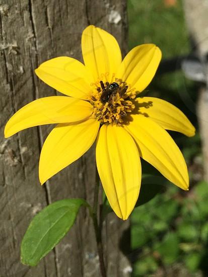 Yellow Flower Bug Bee Nature photo