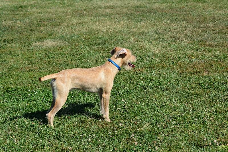 My dog Hank Aaron. photo