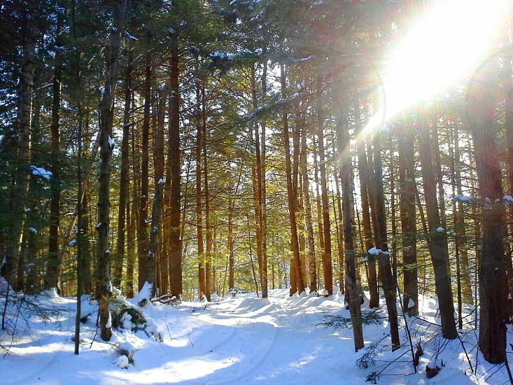 A sun flare in the woods.  photo