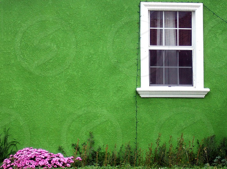 Patch of pick flowers grows near a bright green home with a white framed window. photo