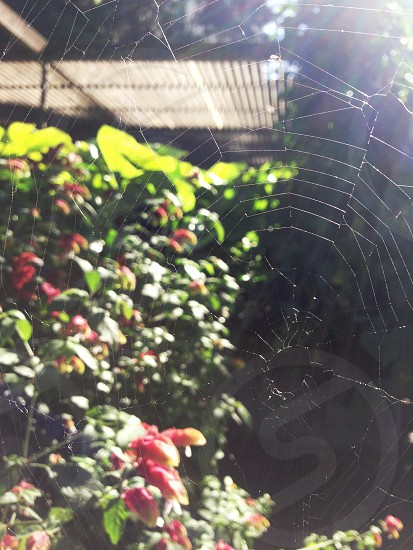 Barely there. Spiderweb.   photo