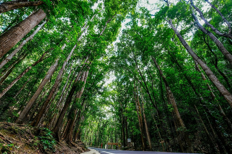 green forrest photo