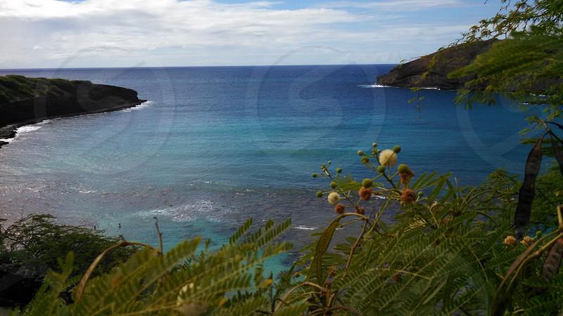 Hawaii beach tropical summer beautiful.  photo
