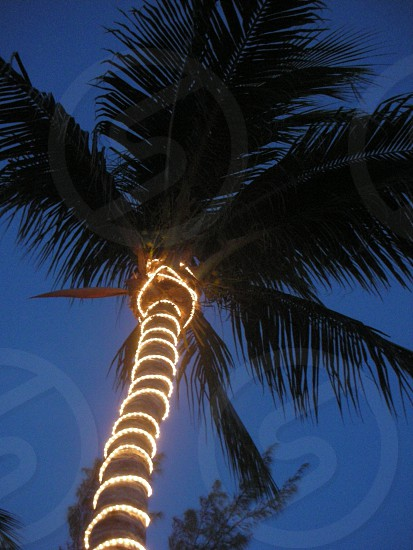 coconut palm tree with yellow lights photo