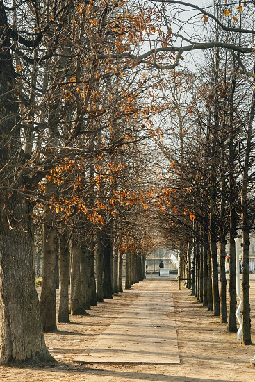 Tuileries Garden Paris France photo