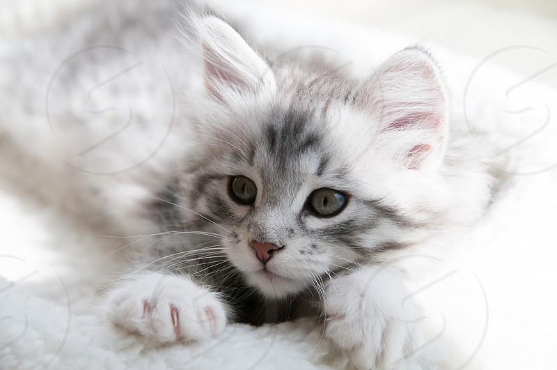 cute cat kitten pet animal photo