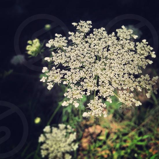 Simple white flower focus macro photo
