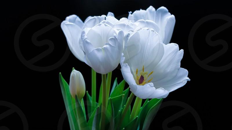 white petaled flowers photo