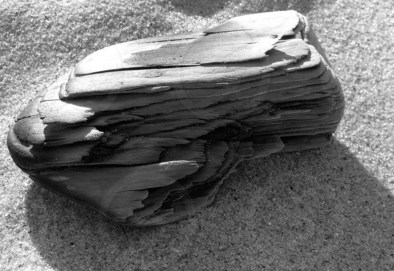 Piece of driftwood in black and white photo