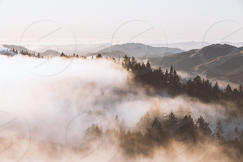 fog clouds hills atmosphere trees calm peaceful photo