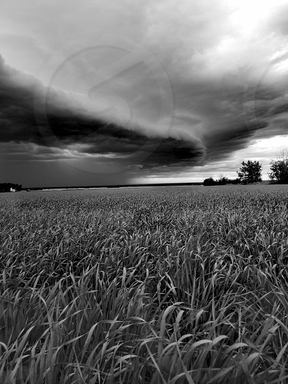 Spring wheat on farm beneath evening storms. photo