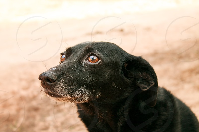 Who's a good doggie!?! photo
