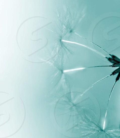 close up photography dandelion flower photo