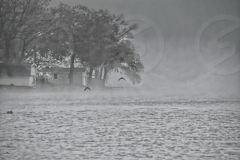 Black & White image of a small cottage on foggy and misty lake. a duck and seagulls flying. photo