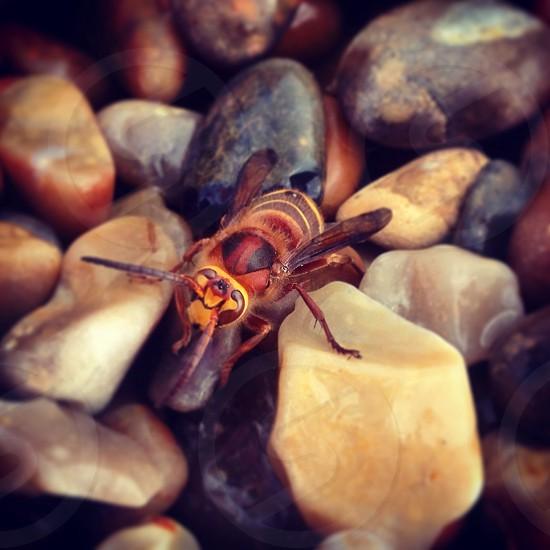 Hornet wildlife sheltering photo