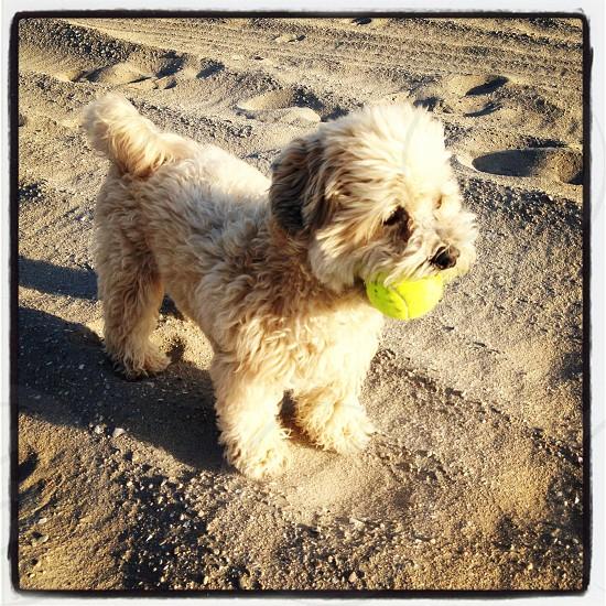 Puppy on the beach. photo