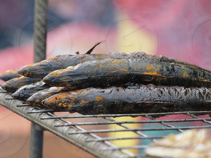 smoke fish photo