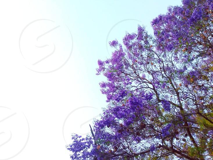 Lavender spring. photo