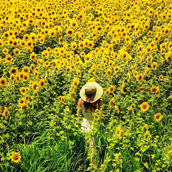 woman at the sunflower garden photo