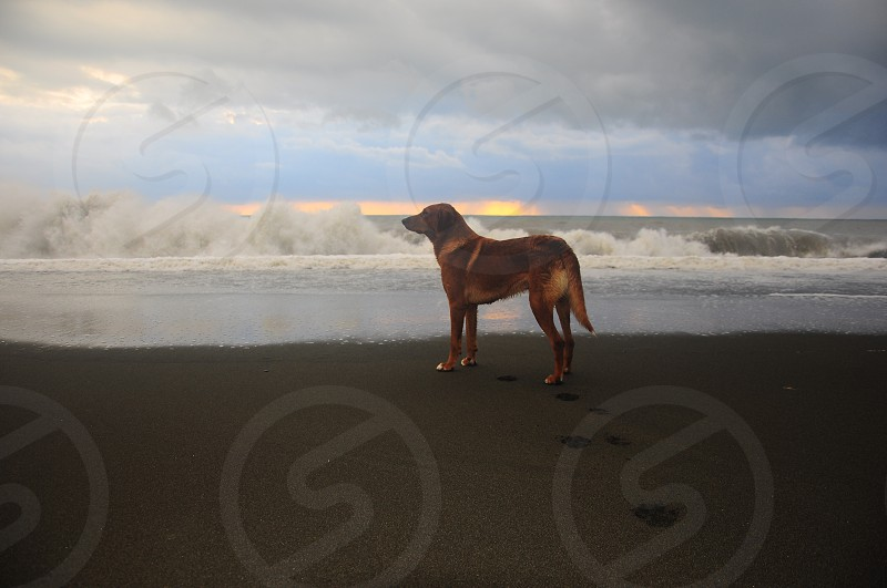 paw print in the brown of brown short hair coated dog near ocean during daytime photo