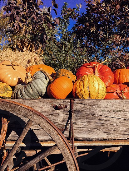 Seasonal Fall Pumpkins photo