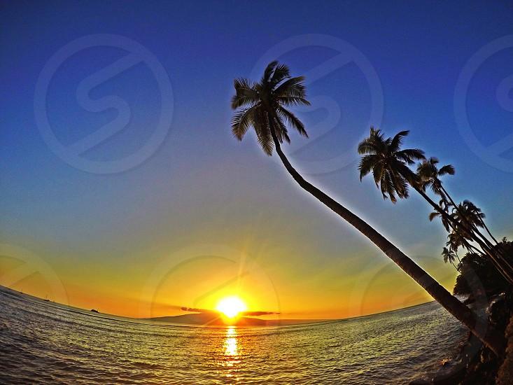 sunset sea plamtrees blue orange nature island hawaii photo