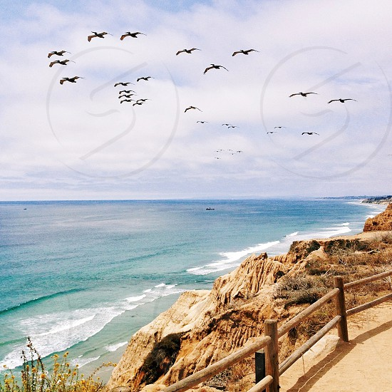 sea shore view with black birds flying photo