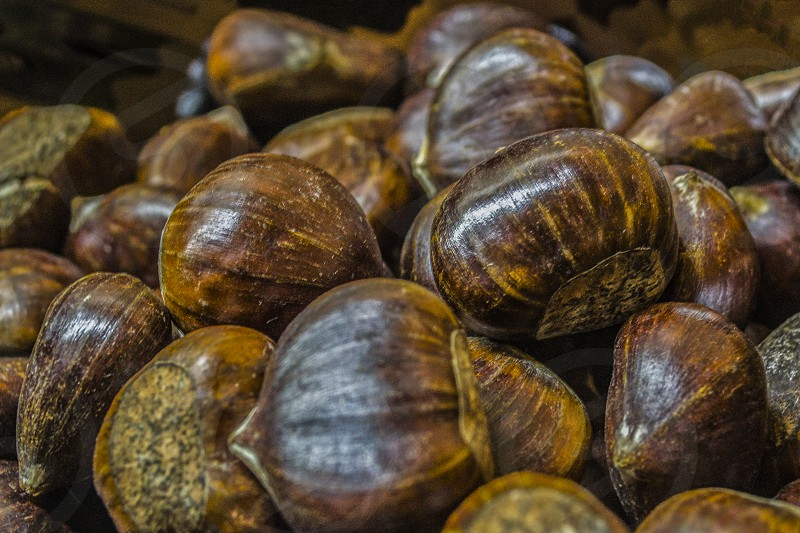 A pile of edible chestnuts on the kitchen counter photo