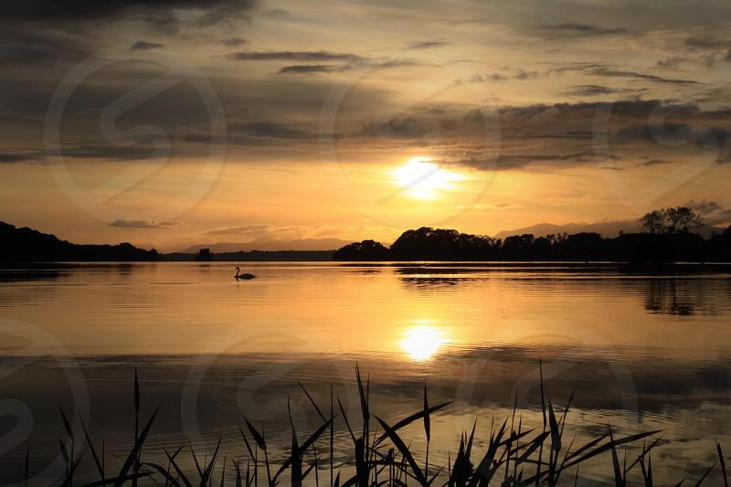 Sunset lake reflection landscape ireland Killarney park serenity scenic colourful bird swan goose  photo