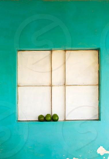 Three avocados in a windowsill photo