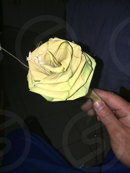 Palmrose rose flower paperrose craft art photo