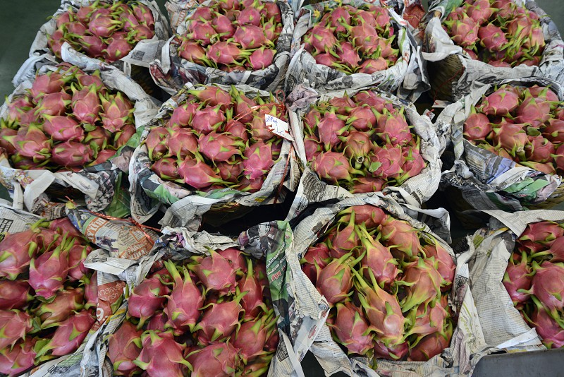 dragon fruits atthe food market at the Maeklong Railway Markt at the Maeklong railway station  near the city of Bangkok in Thailand in Suedostasien. photo