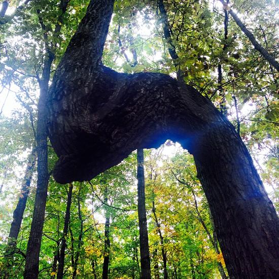 Hiking in North Georgia beautiful tree. photo