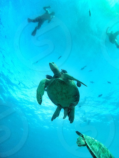 Snorkeling with the turtles!!! photo