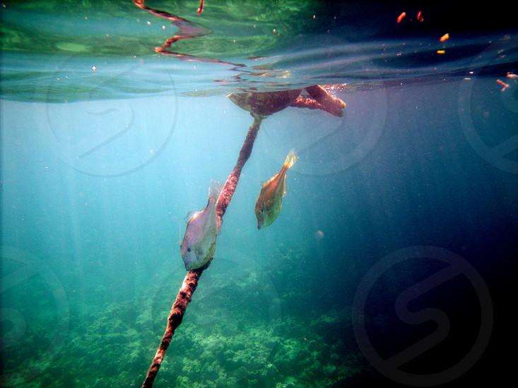 underwater fish Florida photo