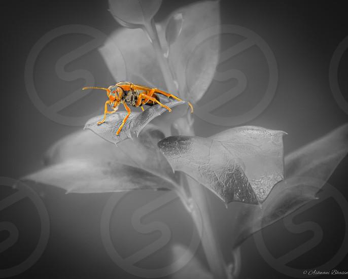 Bug. Dream. Fly. Aim. Simplicity. photo