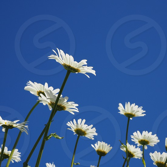 white petaled flowers photography during daytime photo