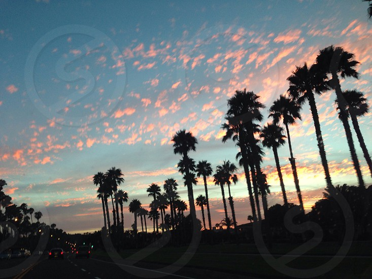 Sunset over palms trees in Santa Barbara photo