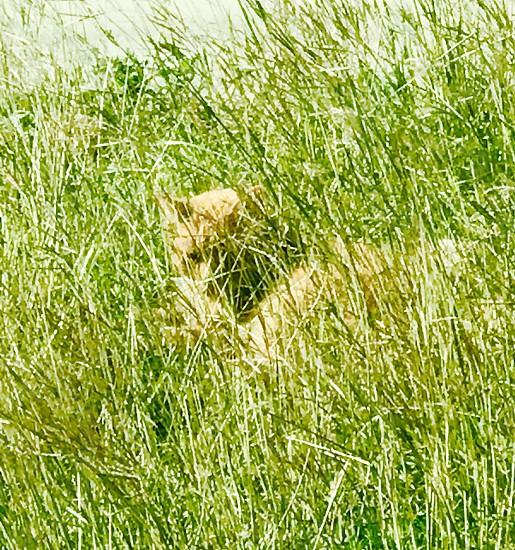 Cats;Animals;wildlife;feral;calico cat photo