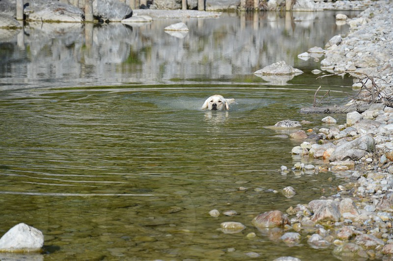white haired dog in water photo