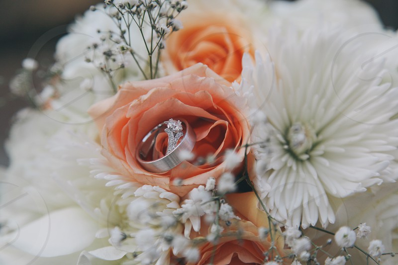 silver engagment ring on beige rose photo