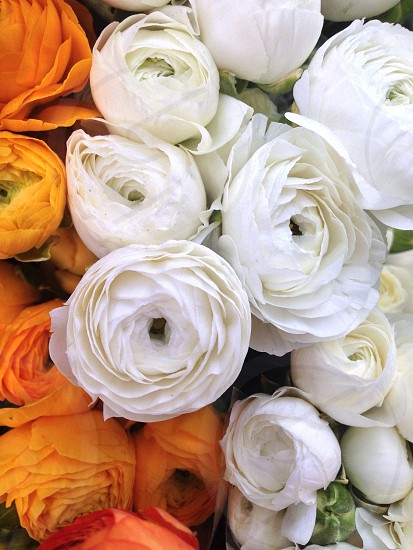 bunch of white and orange roses photo