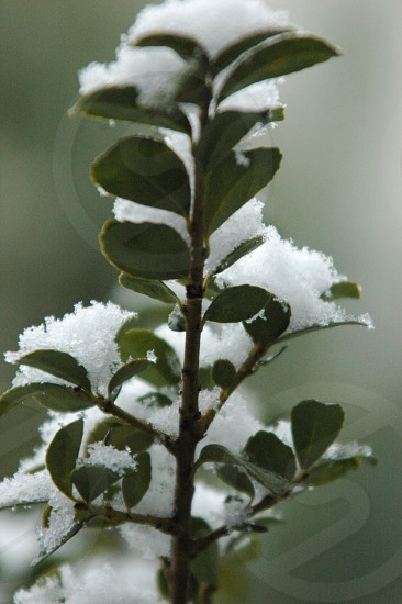 Tree branch covered in snow photo