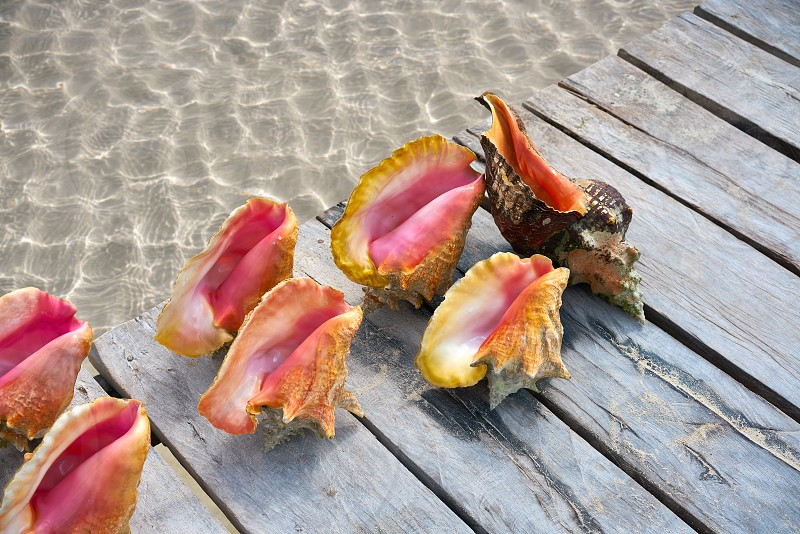 Caribbean seashells on a wooden pier over clear sea in Mexico photo