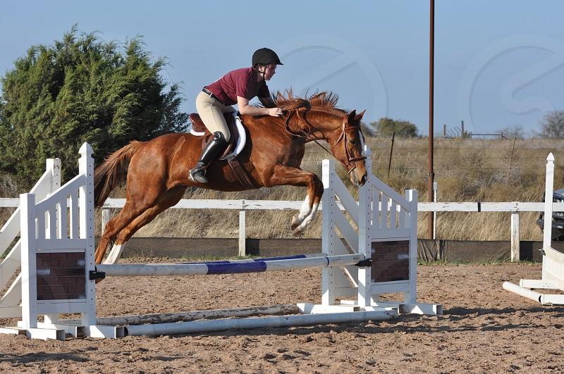 Hunter Jumping photo